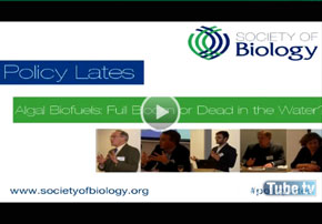 Policy Lates, Algal Biofuels: Full Bloom...