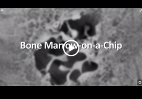 Featured video - Bone Marrow-on-a-Chip