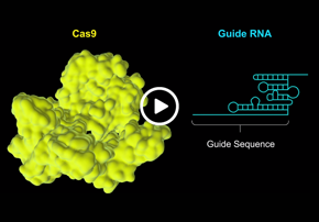Gene Editing Mechanism of CRISPR-Cas9...
