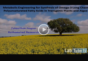 Metabolic Engineering for Synthesis of...