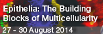 EMBO | EMBL Symposium: Epithelia: The Building Blocks of Multicellularity