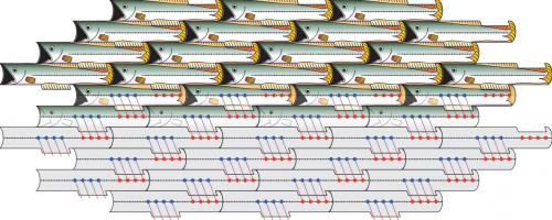26.8.2016 Fish-tiles-500x200.png