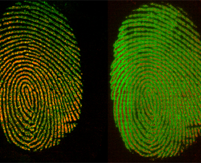 15MML010_fingerprint_overlays_CS.jpg