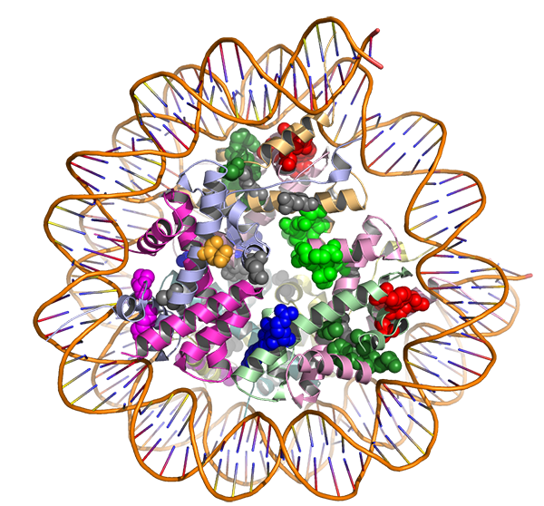3d-protein-structure-article.png