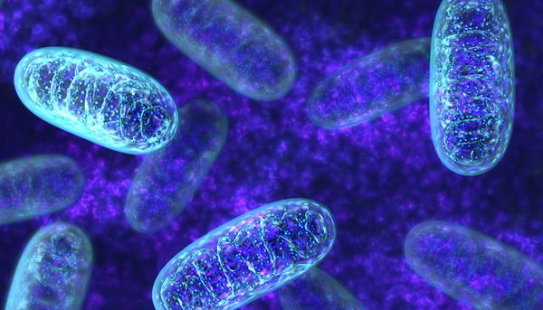 rsz_mitochondria_standard_full_widthjpg.jpg