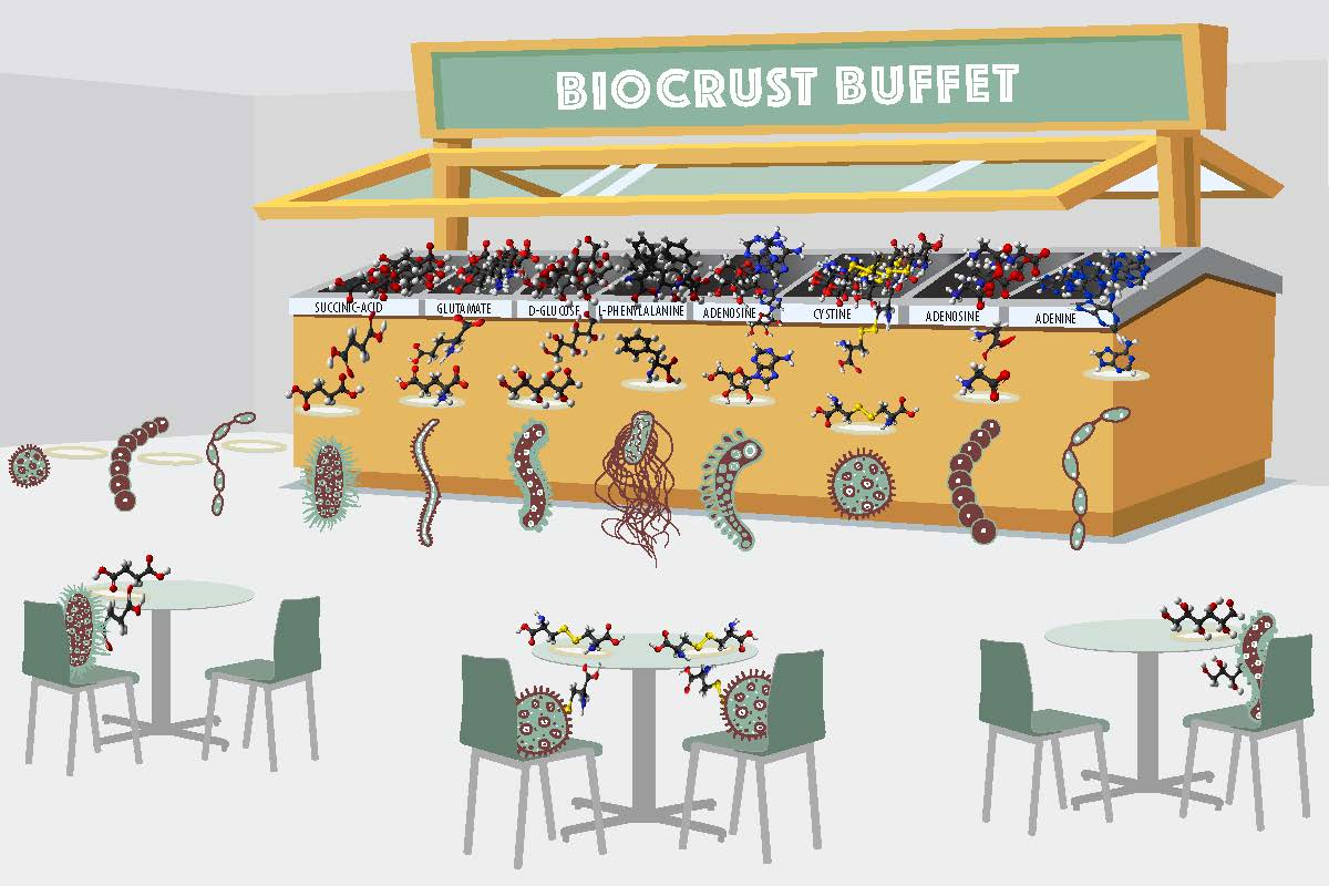 Biocrust-Buffet-Illustration_v4_6x4-1.jpg