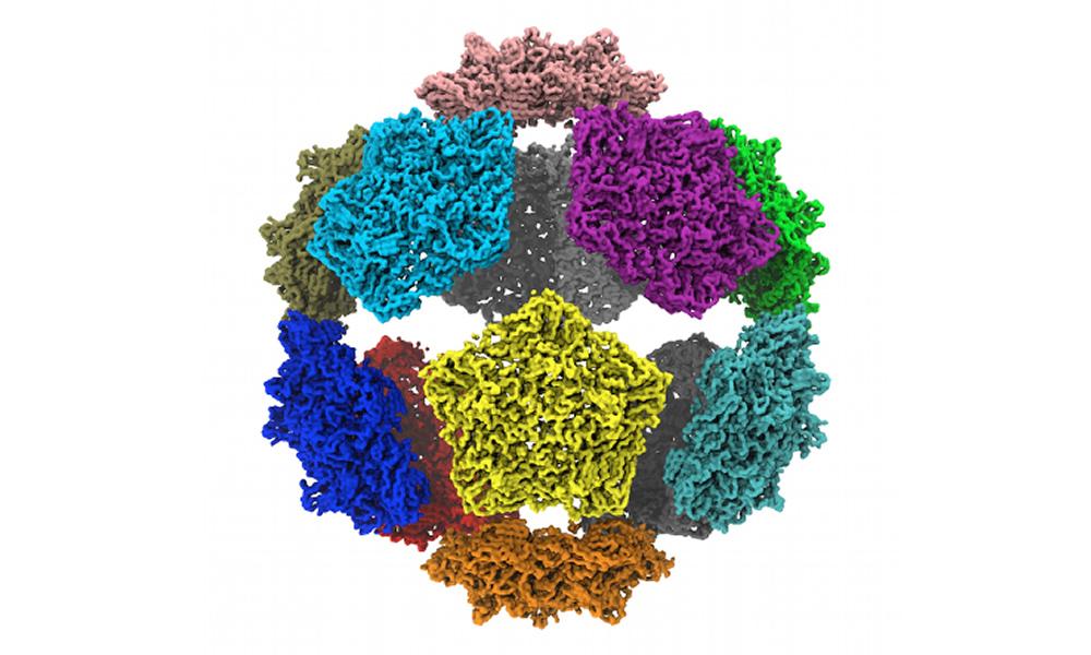protein-meccano.jpg