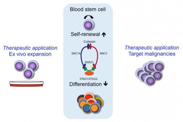 stem_cells_picture_1_kopia.jpg