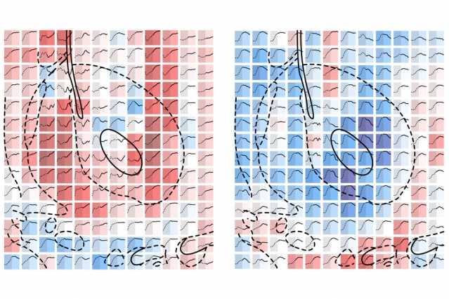 24.10.2016 MIT-Mapping-Serotonin_0.jpg